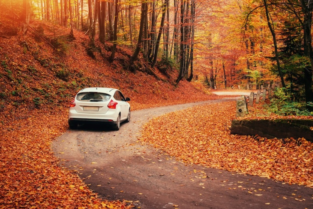 Samochód na leśnej ścieżce. jesienny krajobraz. ukraina. europa