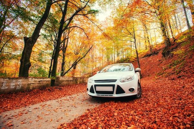 Samochód na leśnej ścieżce. krajobraz. ukraina. europa