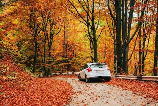 Samochód na leśnej ścieżce. piękna droga w górach ukraina
