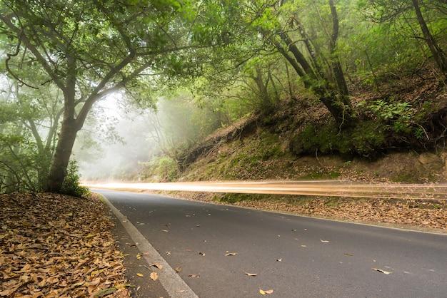 Samochodu światło wlec w mgłowym lesie, anaga, tenerife, wyspa kanaryjska, hiszpania.