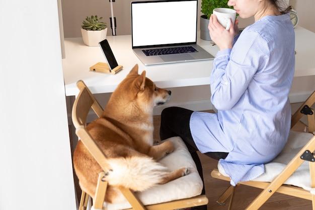 Samoizolacja covid-19 i koncepcja pracy w domu. kobieta korzystająca z laptopa, pies shiba inu obok niej