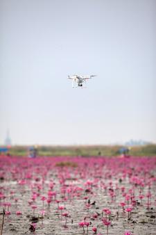 Samolot dronów unoszący się nad jeziorem różowego lotosu