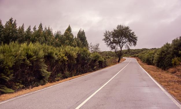 Samotna droga w pochmurną pogodę
