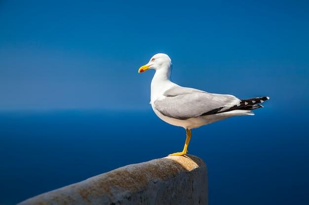 Samotna mewa z tłem nieba i morza
