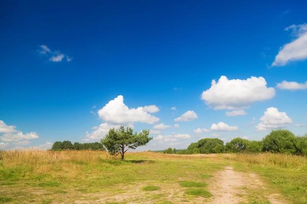 Samotna, nisko rosnąca sosna pośrodku pola na tle błękitnego nieba z chmurami