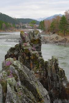 Samotna sosna na szczycie wysokiego, stromego klifu pośrodku górskiej rzeki skalne smoki zęby