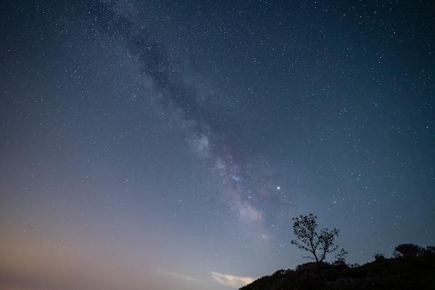 Samotne drzewo i droga mleczna na nocnym niebie.