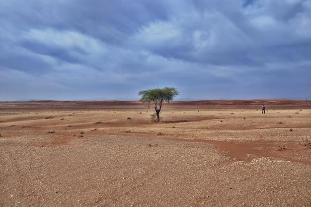 Samotne drzewo na pustyni pod zapierającym dech w piersiach pochmurnym niebem w ciągu dnia