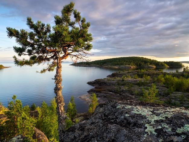 Samotne drzewo na szczycie góry w promieniach zachodzącego słońca. jezioro ładoga. republika karelii, rosja