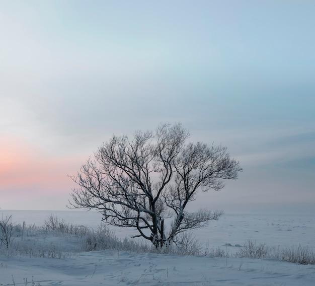Samotne drzewo na tle zachodu słońca zimowy wieczór