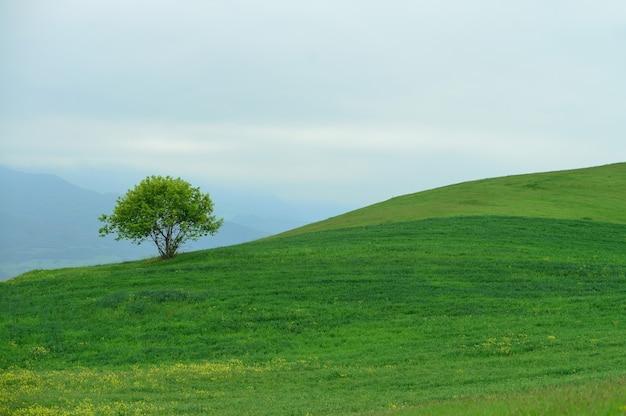 Samotne drzewo na wzgórzu. pochmurna pogoda. pojęcie natury.