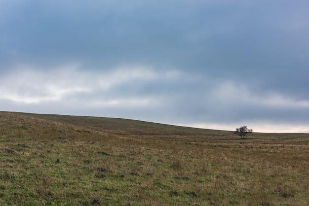 Samotne Drzewo Na Zboczu Wzgórza, Wyżyny Premium Zdjęcia