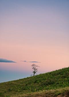 Samotne drzewo na zielonym wzgórzu z kolorowym niebem na wsi