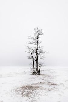 Samotne drzewo nad brzegiem zaśnieżonego jeziora zimą w stylu minimalizmu nad brzegiem zatoki fińskiej w sankt petersburgu w tonacji high-key