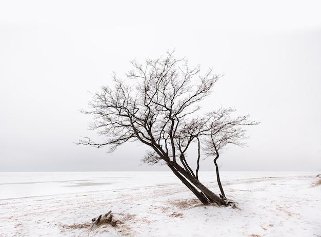 Samotne drzewo nad brzegiem zaśnieżonego jeziora zimą w stylu minimalizmu nad brzegiem zatoki fińskiej w sankt petersburgu
