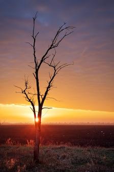 Samotne drzewo o zachodzie słońca