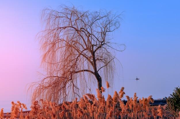 Samotne drzewo oświetlone zachodem słońca nad jeziorem garda