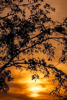 Samotne drzewo sylwetka o zmierzchu w tropikalnym lesie