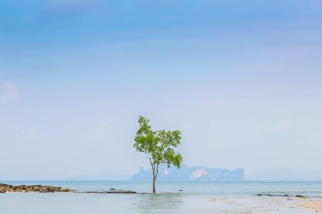 Samotne drzewo tle morza