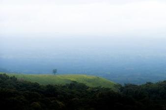Samotne drzewo w górach