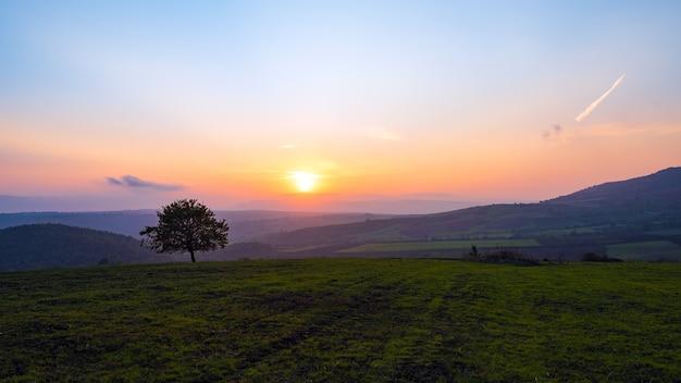 Samotne drzewo w polu o zachodzie słońca
