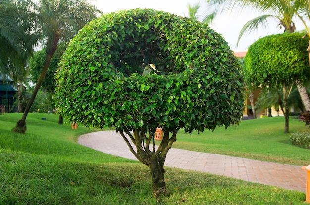 Samotne drzewo w zielonym ogrodzie