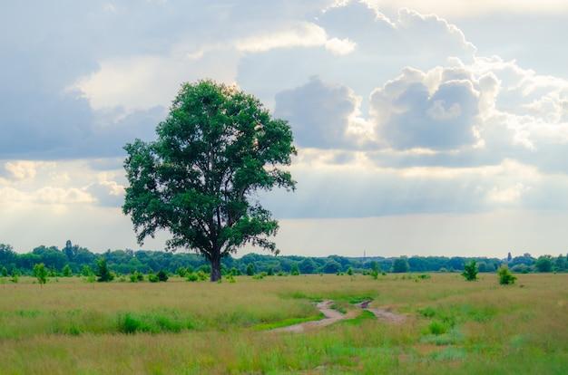 Samotne drzewo z polnej drodze w pobliżu lasu