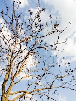 Samotne drzewo z suchymi liśćmi na gałęzi pod błękitnym niebem w parku narodowym.