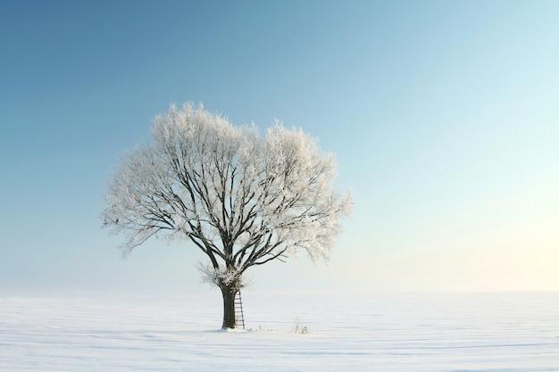 Samotne drzewo zima pokryte szronem na tle błękitnego nieba