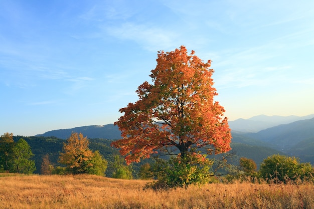 Samotne jesienne drzewo na zboczu karpat (i wieczorne niebo z chmurami).