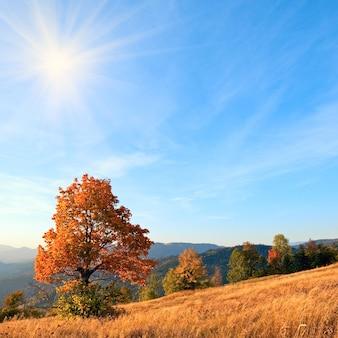 Samotne jesienne drzewo na zboczu karpat (i wieczorne niebo ze słońcem i kilkoma chmurami).