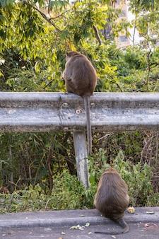 Samotne małpy siedzą na poboczu drogi w tle przyrody.
