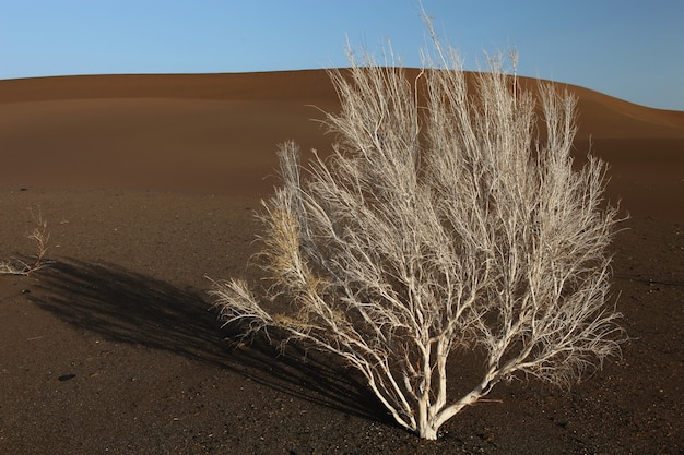 Samotne nagie drzewo na piaszczystej ziemi w xijiang, chiny