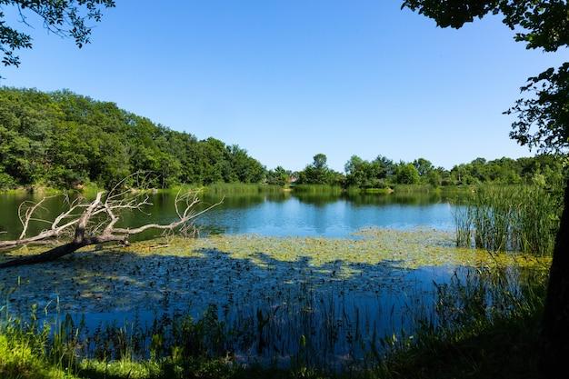 Samotne suche drzewo na tle górskiego jeziora i błękitnego nieba.