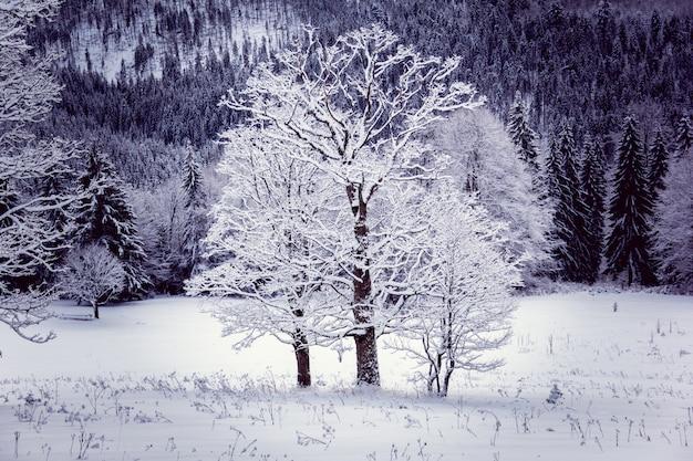Samotnie trzy drzewa zimą