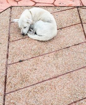 Samotny chory pies śpi.