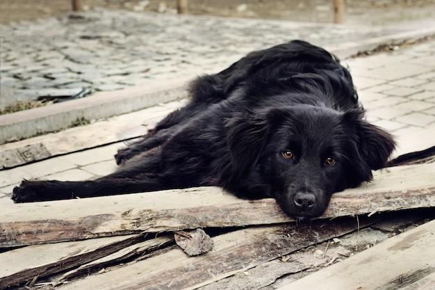 Samotny czarny pies o smutnych oczach leży i czeka na kogoś na zewnątrz