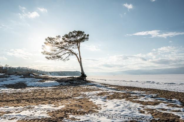 Samotny drzewo na zimy jeziorze baikal. piękny widok na śnieg pokryty lodem jeziora i góry