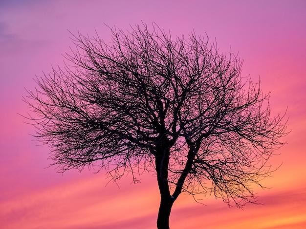 Samotny drzewo w zimy wybrzeża polu w zmierzch menchiach, purpurowym niebie z skałami i śniegu
