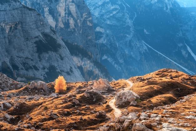Samotny drzewo z pomarańcze opuszcza na wzgórzu przeciw górom przy zmierzchem w jesieni. krajobraz z skałami, lasem, kolorową trawą i śladem w góra parku w dolomitach, włochy. jesienne dekoracje. alpy włoskie