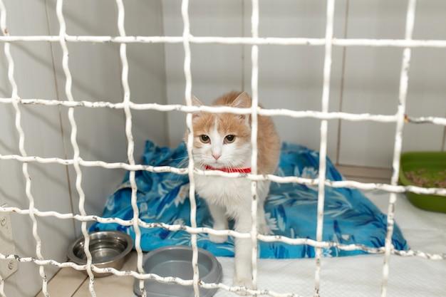 Samotny kot w klatce schronienia