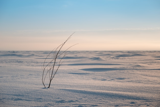 Samotny krzew. zimowy krajobraz.