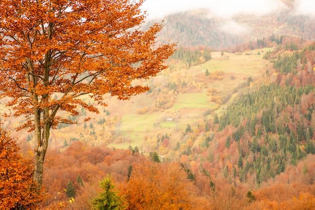 Samotny majestatyczny buk na zboczu wzgórza ze słonecznymi belkami w górskiej dolinie