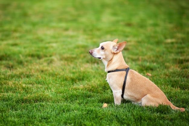 Samotny pies siedzi w publicznym parku i czeka na powrót właścicieli.