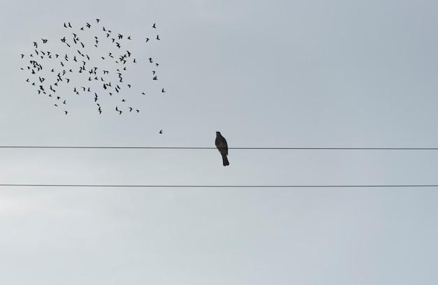Samotny ptak siedzący na drutach