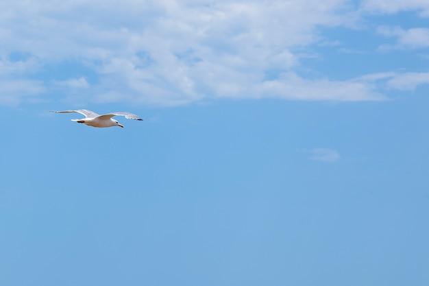 Samotny ptak w powietrzu na tle błękitnego pochmurnego nieba