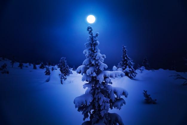 Samotny świerk na zaśnieżonym wzgórzu.