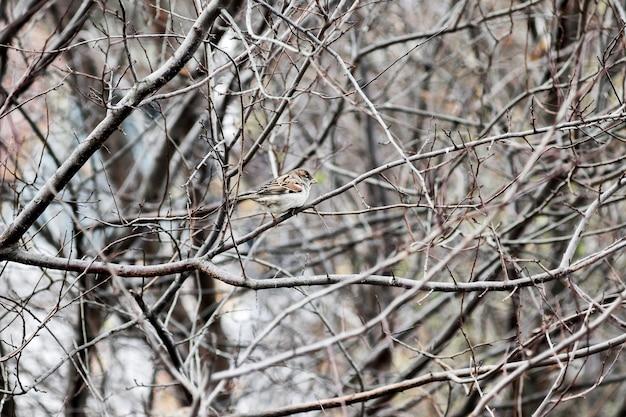 Samotny wróbel wśród grubych, nagich gałęzi jesienią