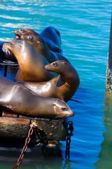 San francisco pier 39 latarni morskiej i uszczelnień w kalifornii
