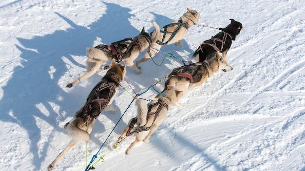 Saneczkarstwo z psami husky widok z góry